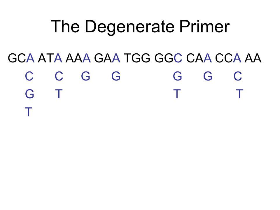 The Degenerate Primer GCA ATA AAA GAA TGG GGC CAA CCA AA C C G G G G C G T T T T