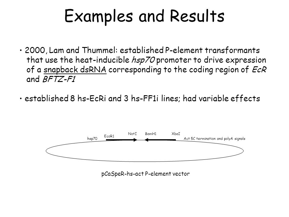 Examples and Results 2000, Lam and Thummel: established P-element transformants that use the heat-inducible hsp70 promoter to drive expression of a sn