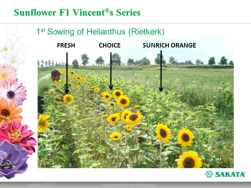 Sunflower F1 Vincent ® s Series January 2012 www.sakataornamentals.com 1 st Sowing of Helianthus (Rietkerk) FRESHCHOICESUNRICH ORANGE