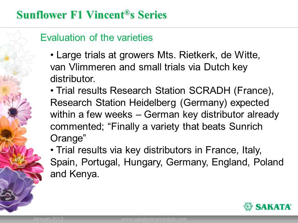 Sunflower F1 Vincent ® s Series January 2012 www.sakataornamentals.com Evaluation of the varieties Large trials at growers Mts. Rietkerk, de Witte, va
