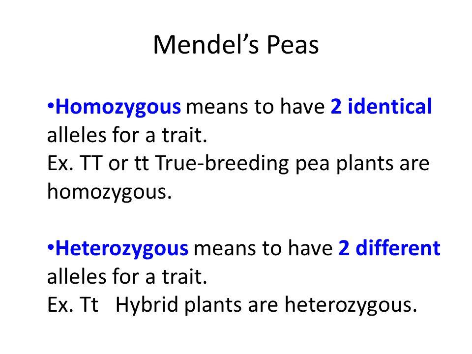 Mendel's Peas Homozygous means to have 2 identical alleles for a trait. Ex. TT or tt True-breeding pea plants are homozygous. Heterozygous means to ha