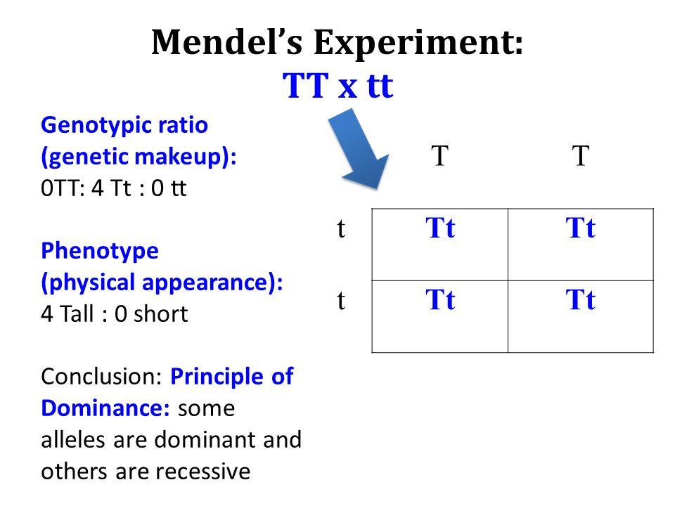 Mendel's Experiment: TT x tt TT tTt Tt t Genotypic ratio (genetic makeup): 0TT: 4 Tt : 0 tt Phenotype (physical appearance): 4 Tall : 0 short Conclusi