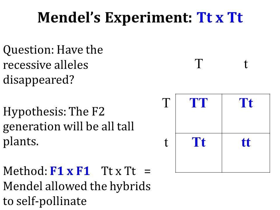 Mendel's Experiment: Tt x Tt Tt TTT Tt t tt Question: Have the recessive alleles disappeared? Hypothesis: The F2 generation will be all tall plants. M