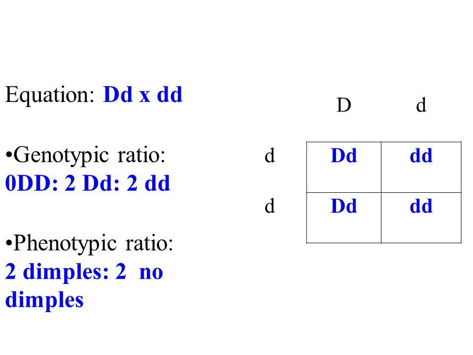 Dd dDd dd dDddd Equation: Dd x dd Genotypic ratio: 0DD: 2 Dd: 2 dd Phenotypic ratio: 2 dimples: 2 no dimples