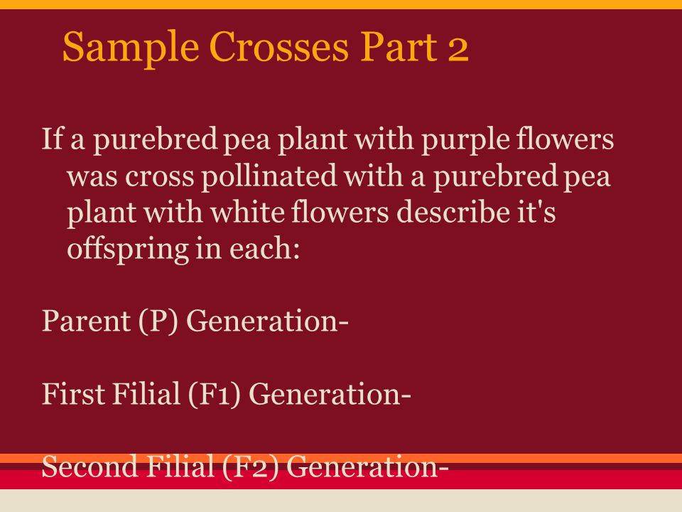 Sample Crosses Part 2 If a purebred pea plant with purple flowers was cross pollinated with a purebred pea plant with white flowers describe it's offs