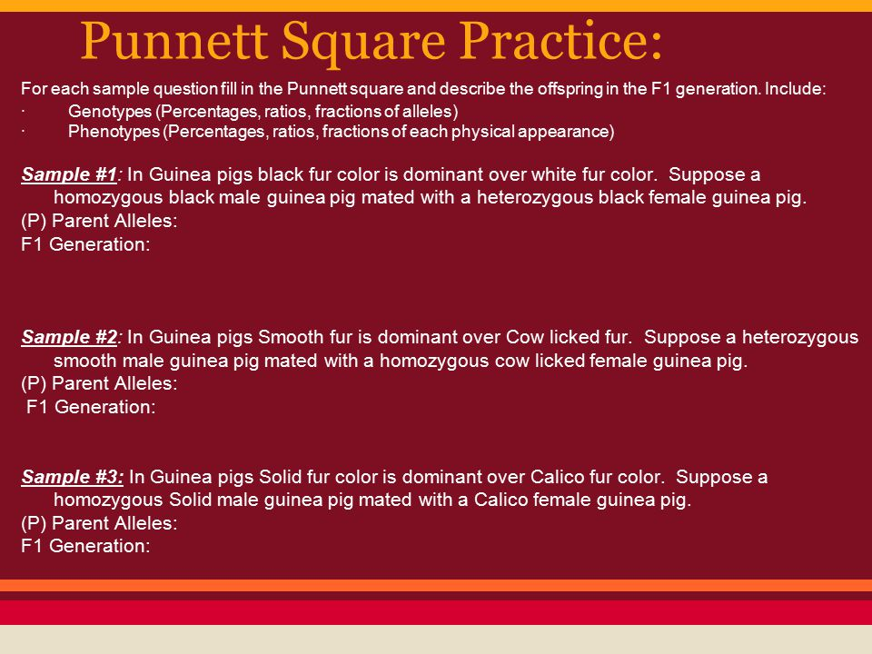 Punnett Square Practice: For each sample question fill in the Punnett square and describe the offspring in the F1 generation. Include: · Genotypes (Pe
