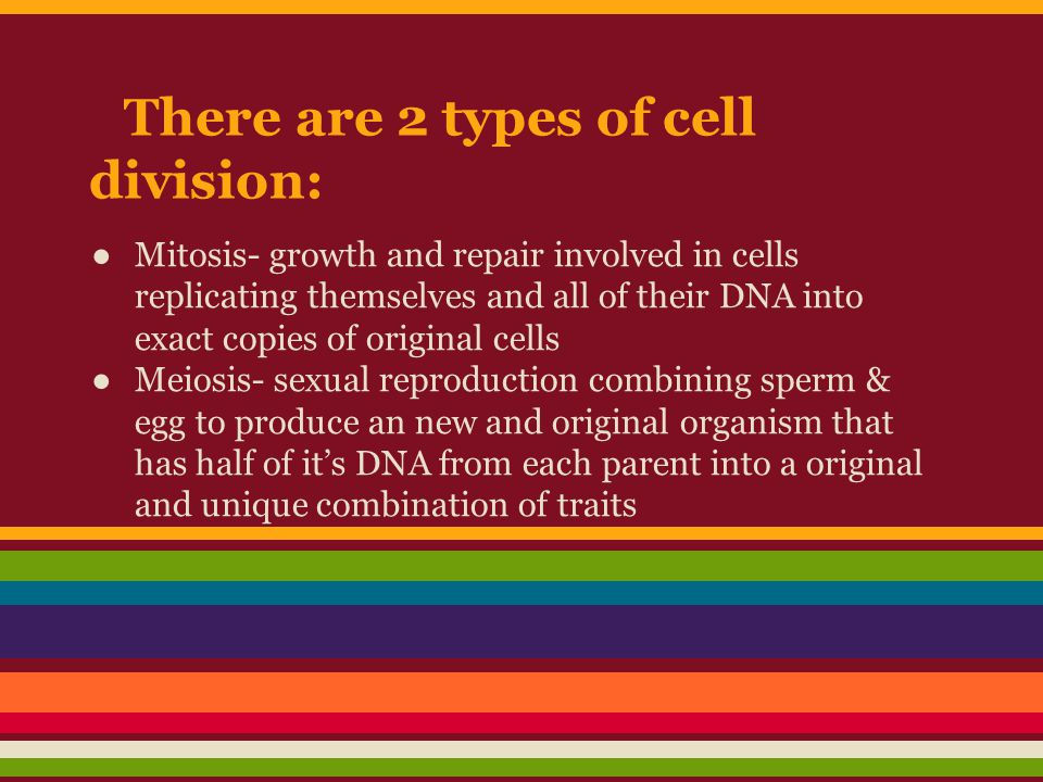 There are 2 types of cell division: ●Mitosis- growth and repair involved in cells replicating themselves and all of their DNA into exact copies of ori