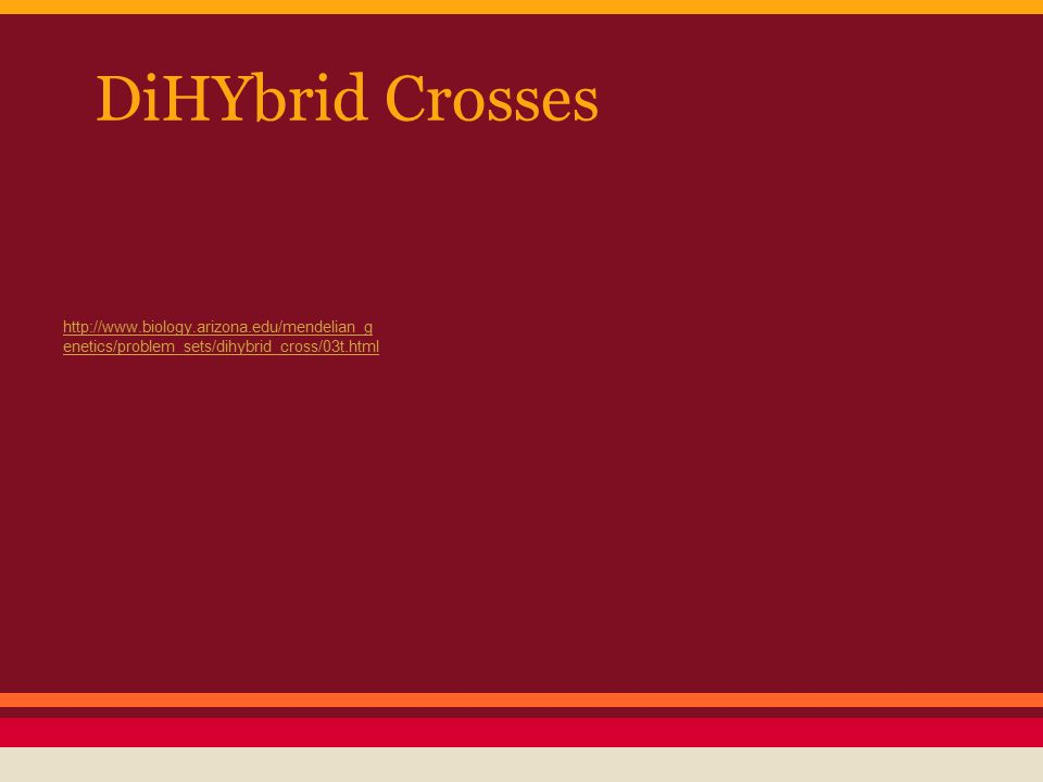 DiHYbrid Crosses http://www.biology.arizona.edu/mendelian_g enetics/problem_sets/dihybrid_cross/03t.html