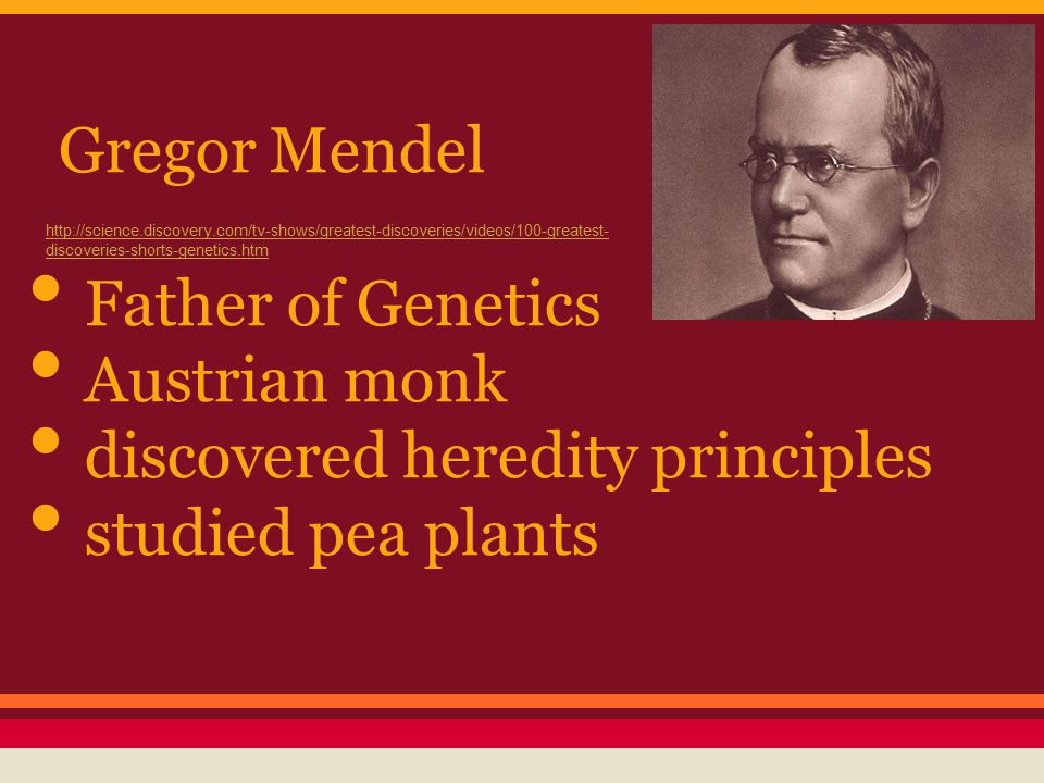 What Is Heredity? Crossing Pea Plants Mendel devised a way to cross-pollinate pea plants.