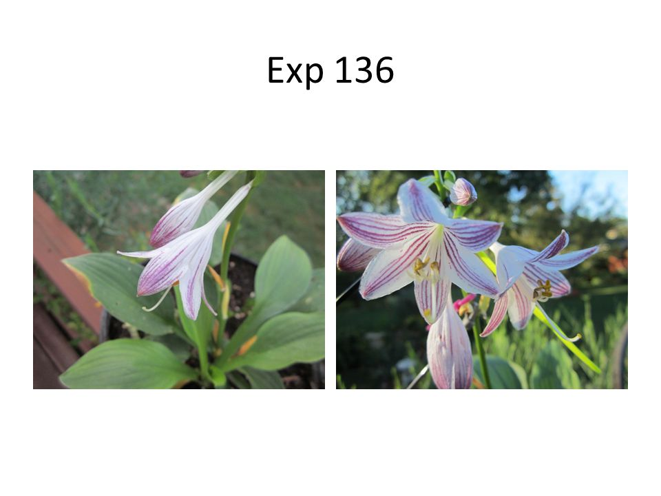 Exp 136