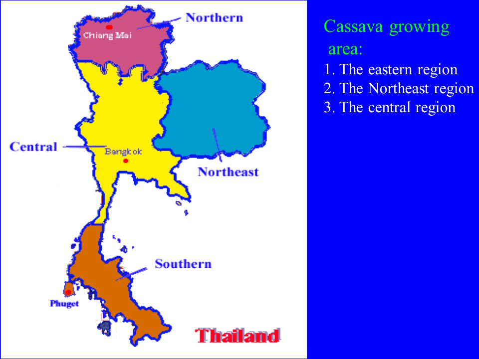 Figure 1.Cassava harvested area, production and yield in Thailand from 1961 to 2005.