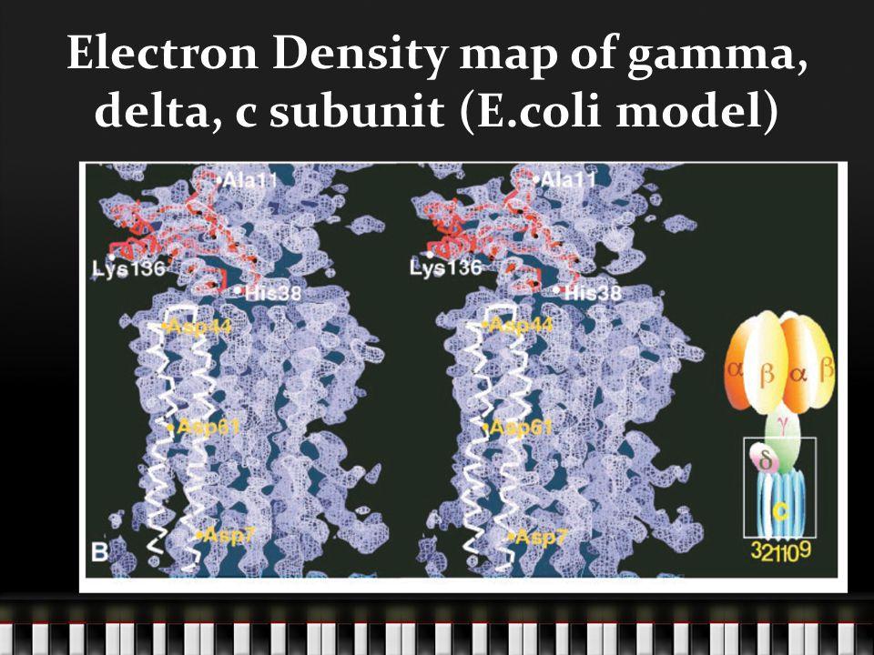 Electron Density map of gamma, delta, c subunit (E.coli model)