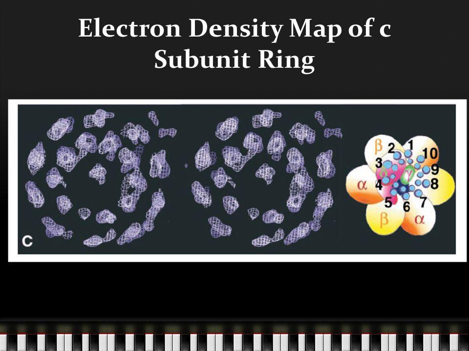 Electron Density Map of c Subunit Ring