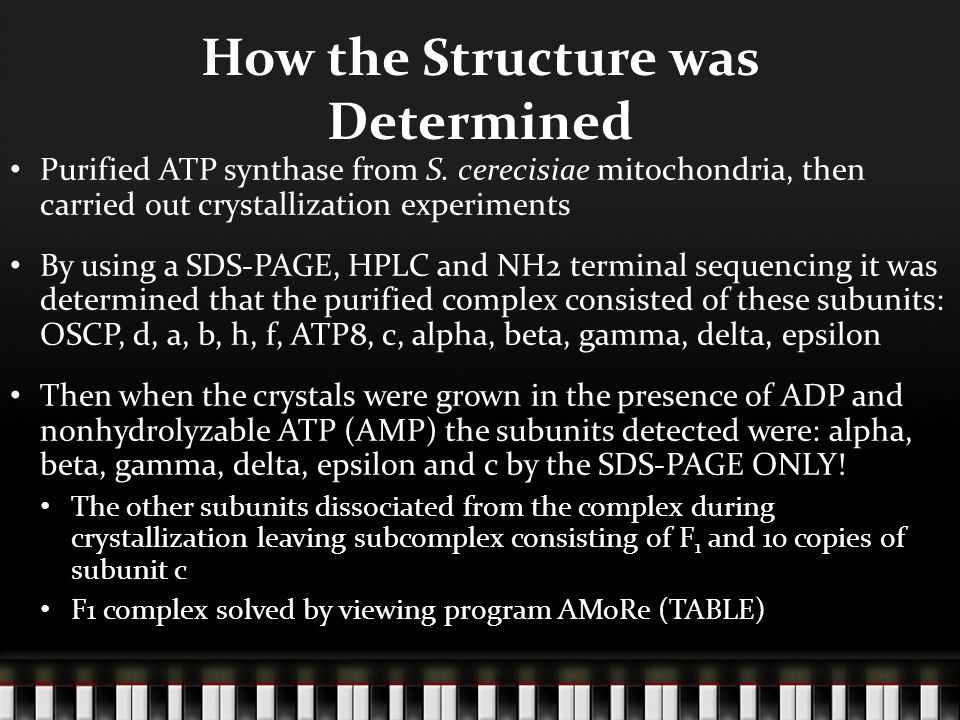 How the Structure was Determined Purified ATP synthase from S.