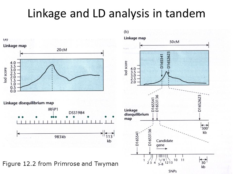 Linkage and LD analysis in tandem Figure 12.2 from Primrose and Twyman