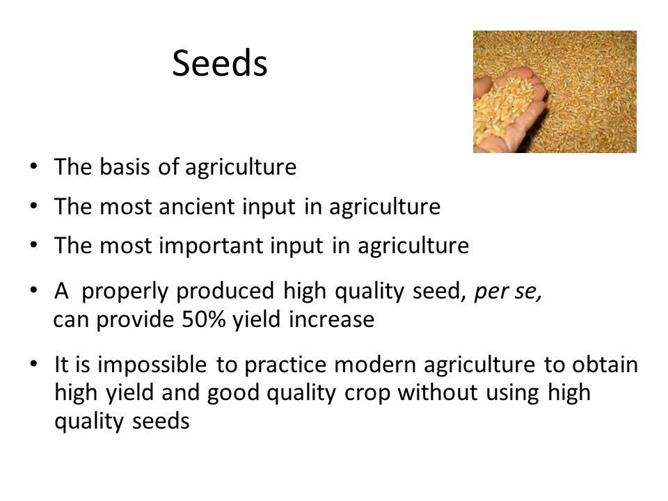 Seeds The basis of agriculture The most ancient input in agriculture The most important input in agriculture A properly produced high quality seed, per se, can provide 50% yield increase It is impossible to practice modern agriculture to obtain high yield and good quality crop without using high quality seeds