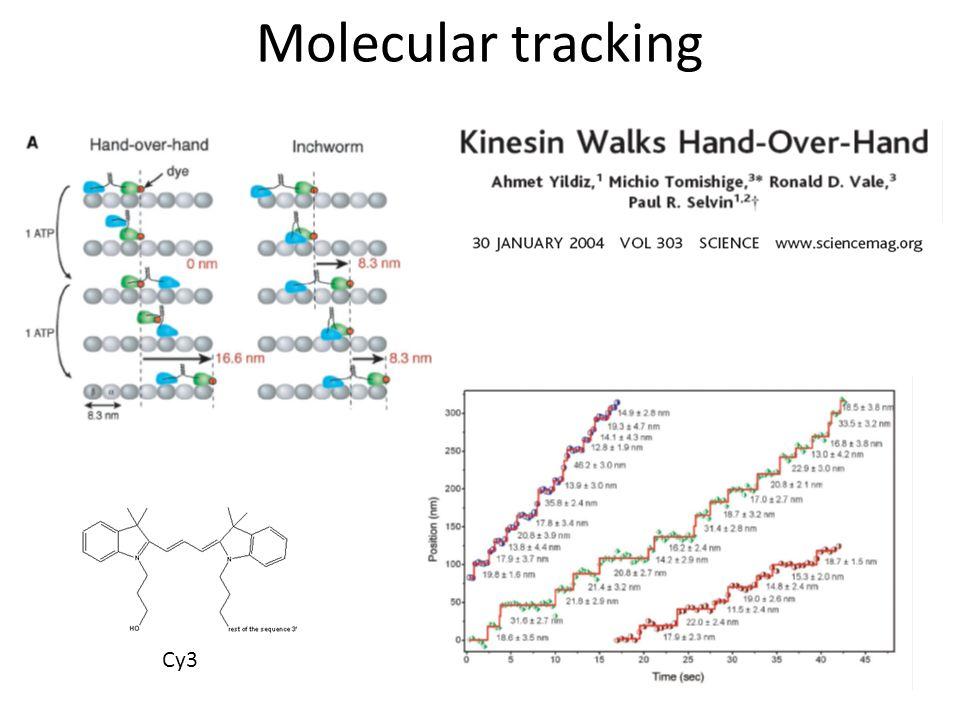 Molecular tracking Cy3