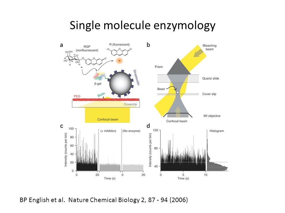 Single molecule enzymology BP English et al. Nature Chemical Biology 2, 87 - 94 (2006)