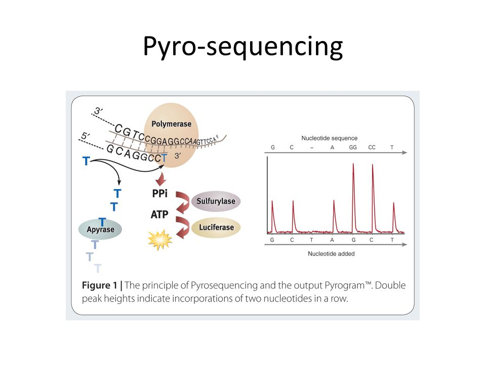 Pyro-sequencing