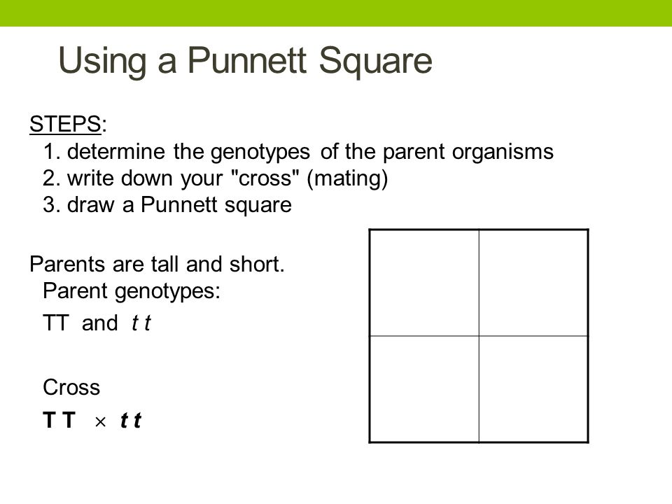 Using a Punnett Square STEPS: 1. determine the genotypes of the parent organisms 2. write down your