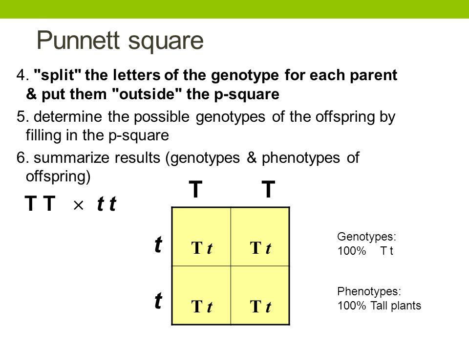 Punnett square 4.