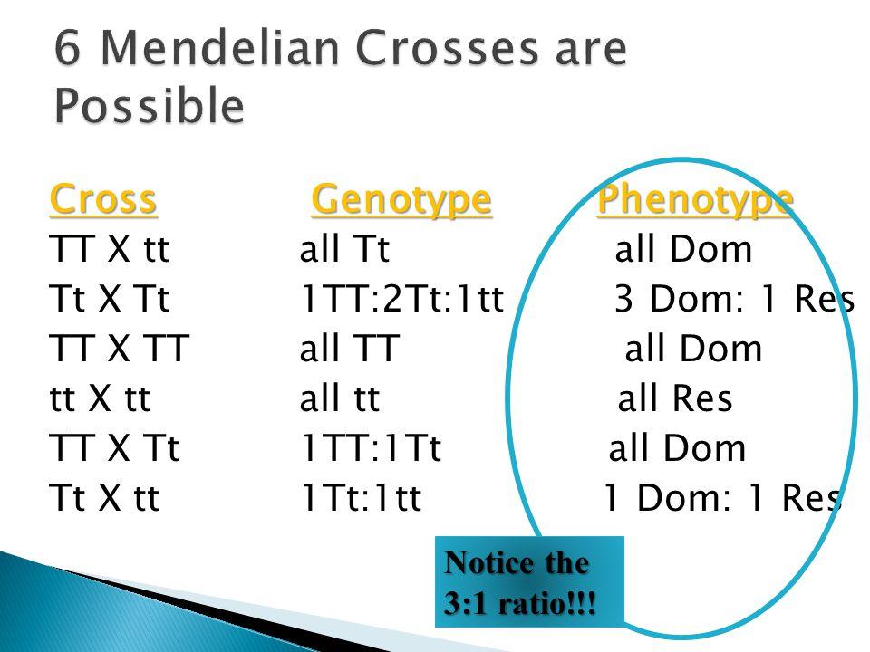 Cross Genotype Phenotype TT X tt all Tt all Dom Tt X Tt 1TT:2Tt:1tt 3 Dom: 1 Res TT X TT all TT all Dom tt X tt all tt all Res TT X Tt 1TT:1Tt all Dom Tt X tt 1Tt:1tt 1 Dom: 1 Res Notice the 3:1 ratio!!!