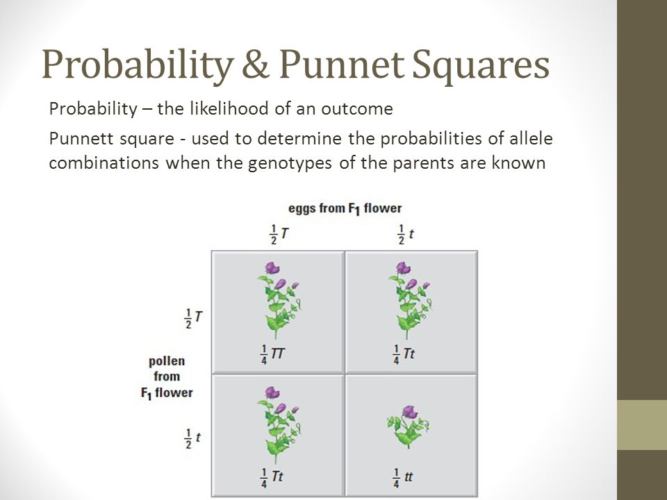 Probability & Punnet Squares Probability – the likelihood of an outcome Punnett square - used to determine the probabilities of allele combinations wh