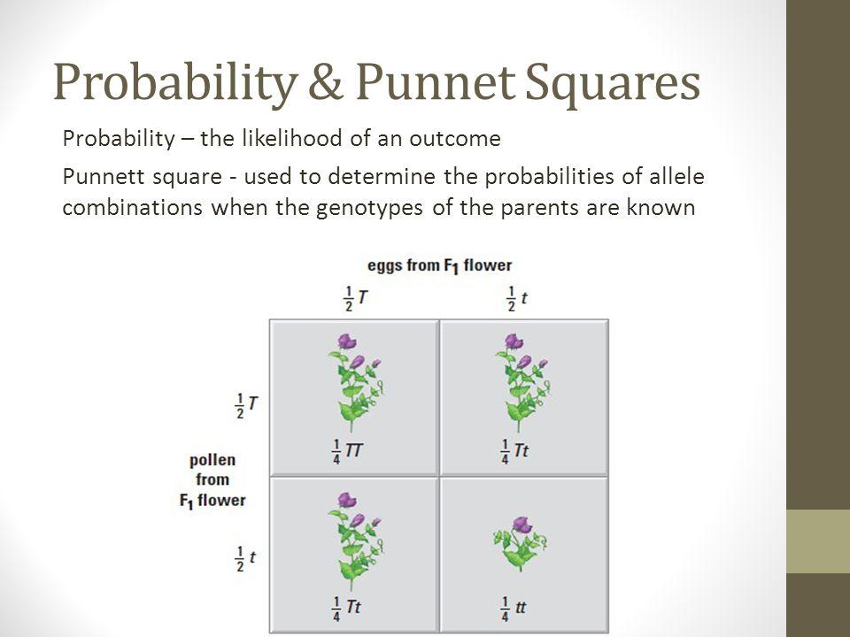Making Punnet Squares