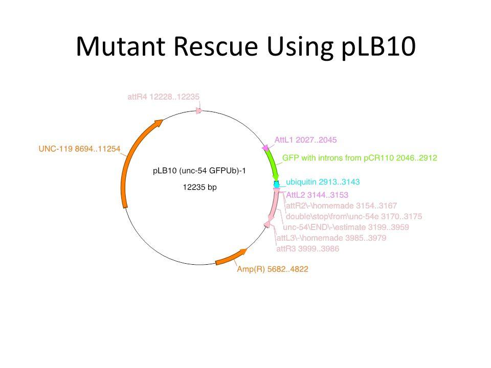 Mutant Rescue Using pLB10