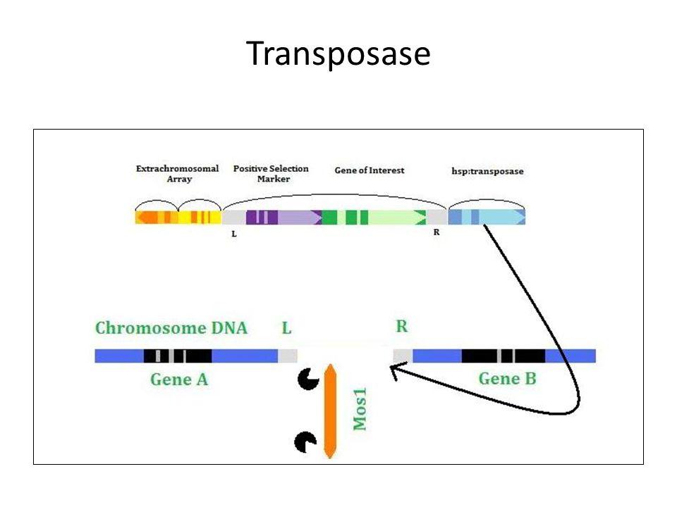 Transposase