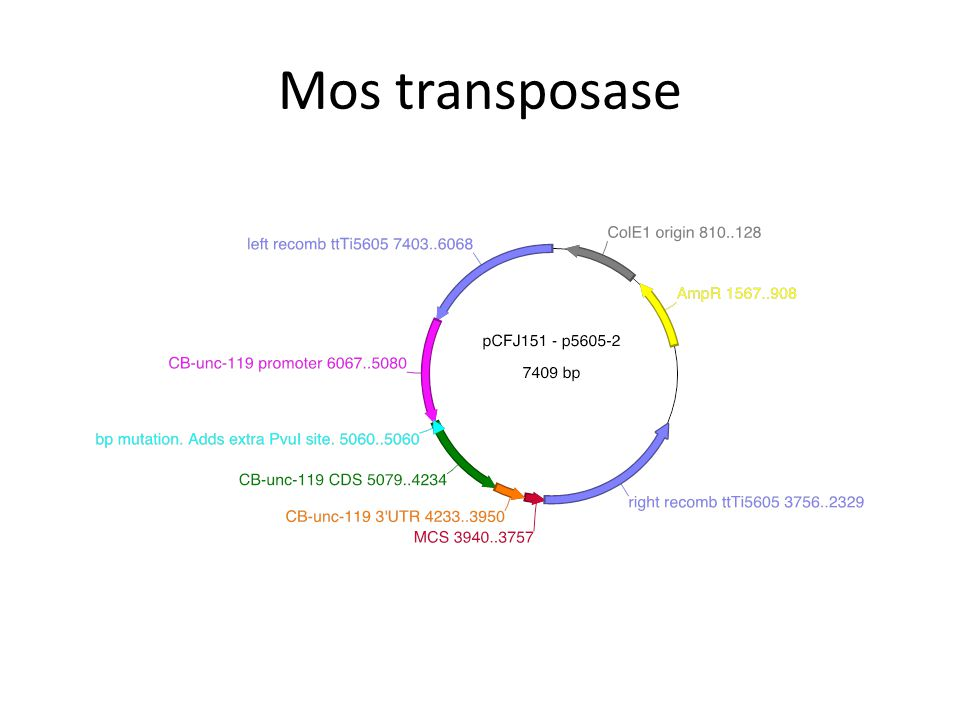 Mos transposase