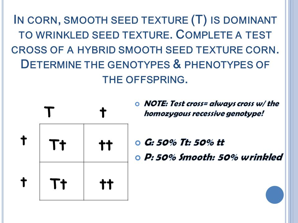 I N CORN, SMOOTH SEED TEXTURE (T) IS DOMINANT TO WRINKLED SEED TEXTURE.
