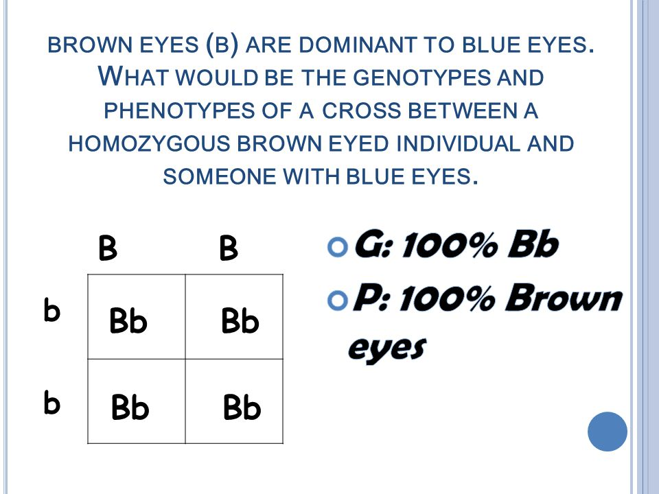 BROWN EYES ( B ) ARE DOMINANT TO BLUE EYES.