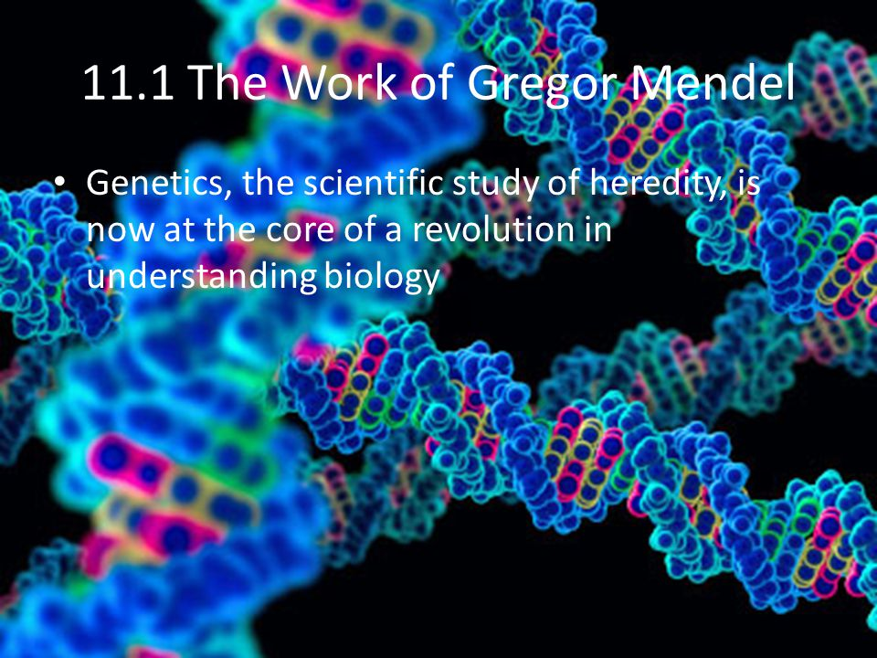 Genetics, the scientific study of heredity, is now at the core of a revolution in understanding biology