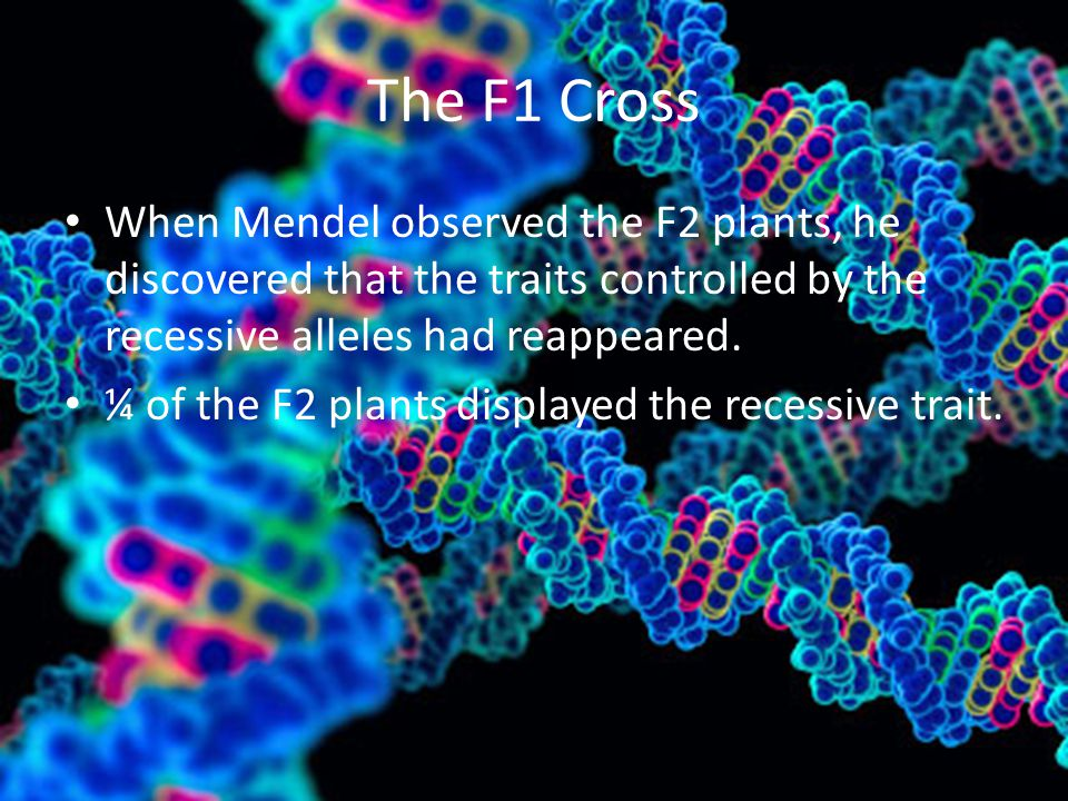 The F1 Cross When Mendel observed the F2 plants, he discovered that the traits controlled by the recessive alleles had reappeared. ¼ of the F2 plants