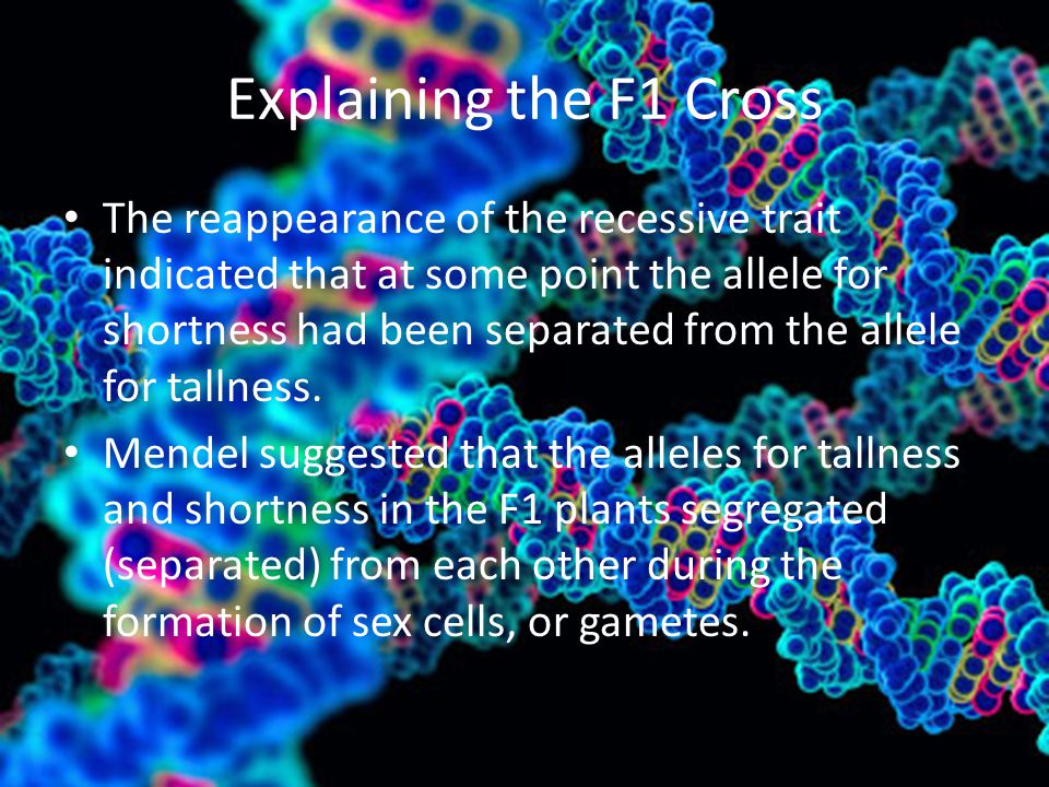 Explaining the F1 Cross The reappearance of the recessive trait indicated that at some point the allele for shortness had been separated from the alle