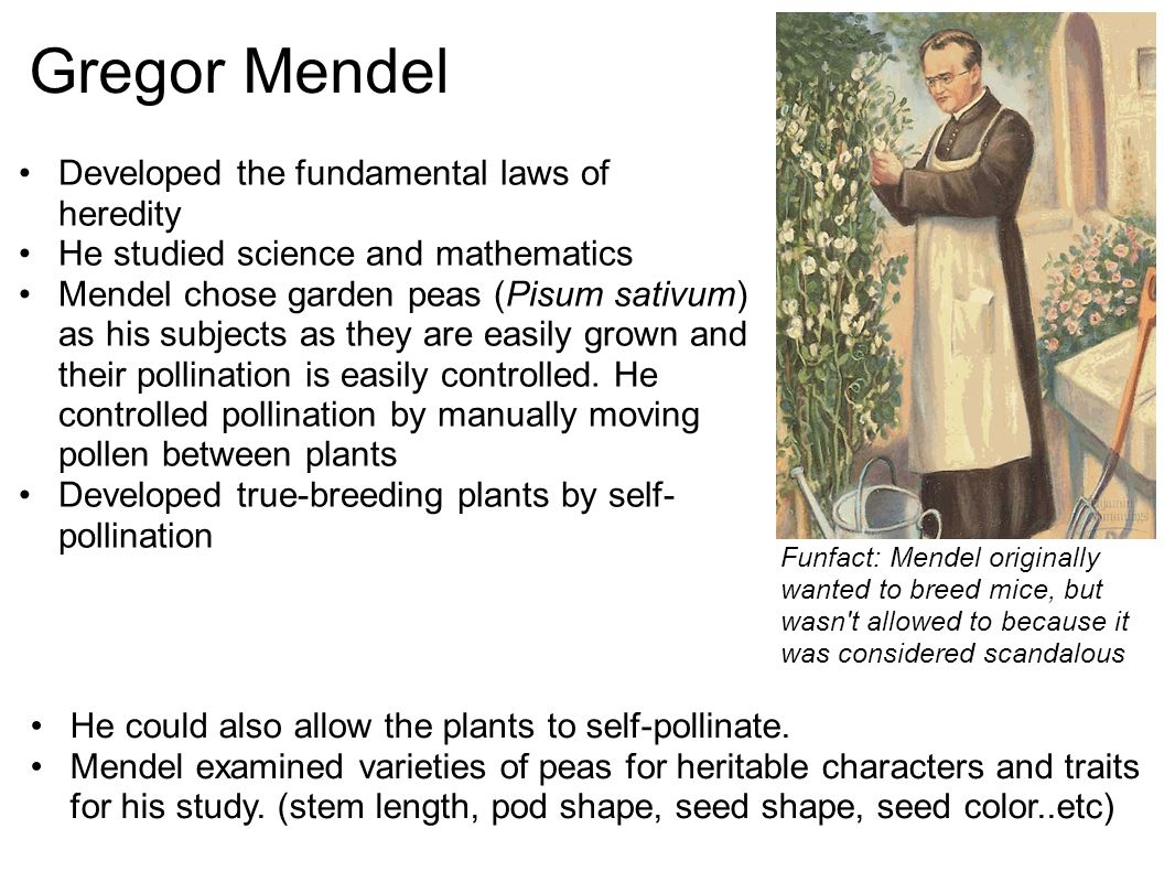 Gregor Mendel Developed the fundamental laws of heredity He studied science and mathematics Mendel chose garden peas (Pisum sativum) as his subjects a