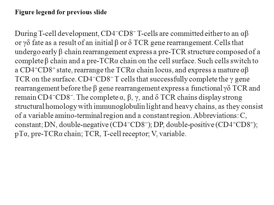 During T-cell development, CD4 − CD8 − T-cells are committed either to an αβ or γδ fate as a result of an initial β or δ TCR gene rearrangement.