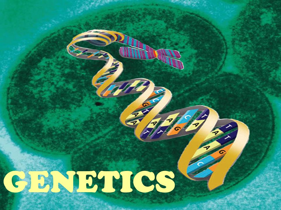 Let s review what you know about genetics......