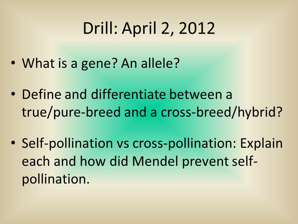 Drill: April 2, 2012 What is a gene? An allele? Define and differentiate between a true/pure-breed and a cross-breed/hybrid? Self-pollination vs cross