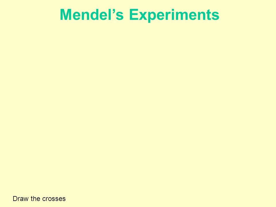 Mendel's Experiments Draw the crosses