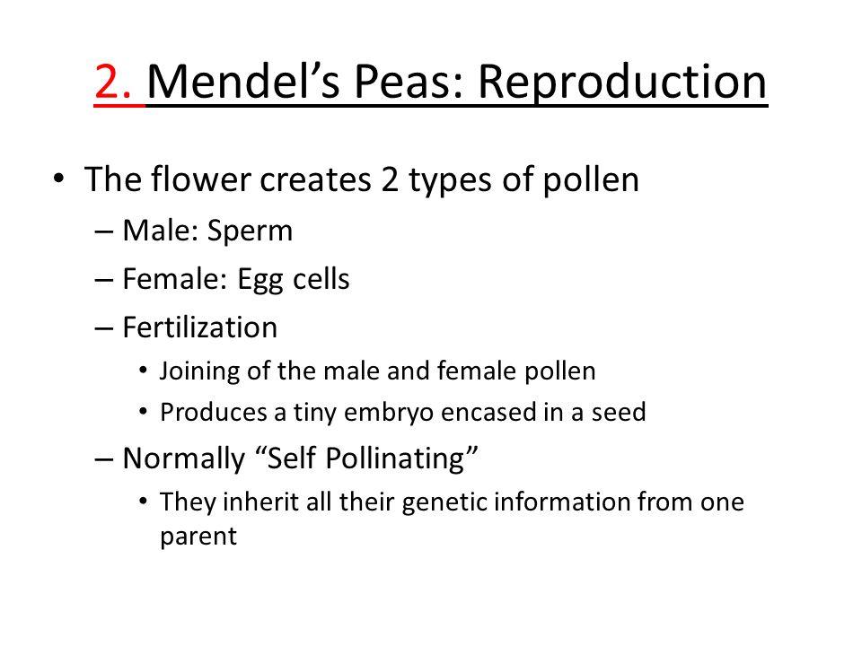 Mendel's Peas: Breeding 3.