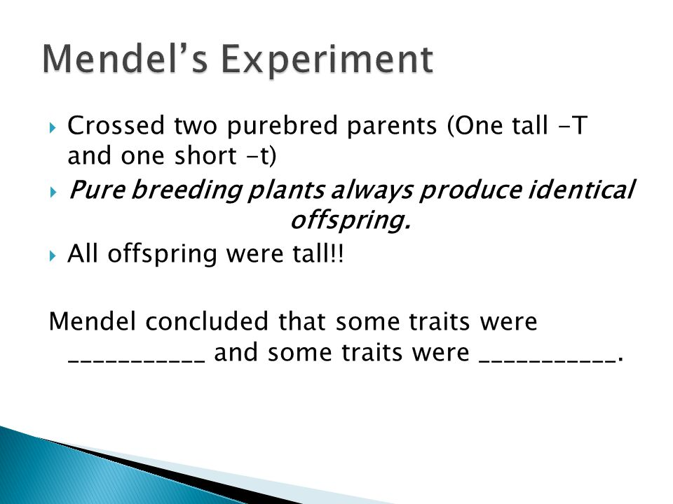  Crossed two purebred parents (One tall -T and one short -t)  Pure breeding plants always produce identical offspring.  All offspring were tall!! M