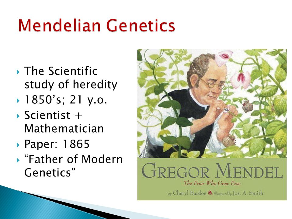 " The Scientific study of heredity  1850's; 21 y.o.  Scientist + Mathematician  Paper: 1865  ""Father of Modern Genetics"""