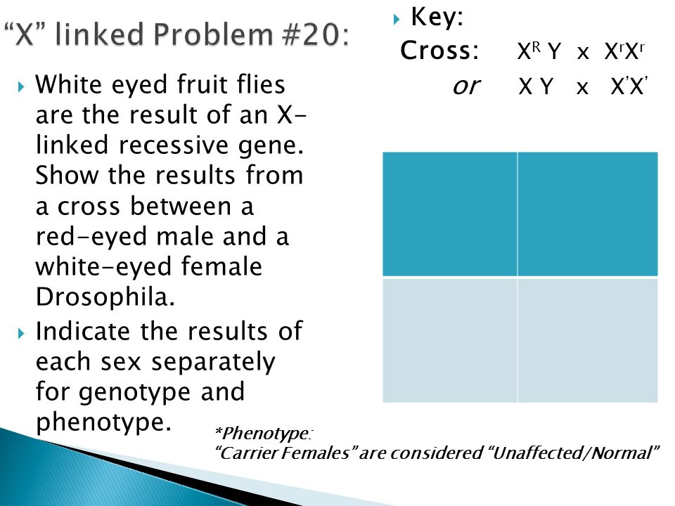 White eyed fruit flies are the result of an X- linked recessive gene. Show the results from a cross between a red-eyed male and a white-eyed female