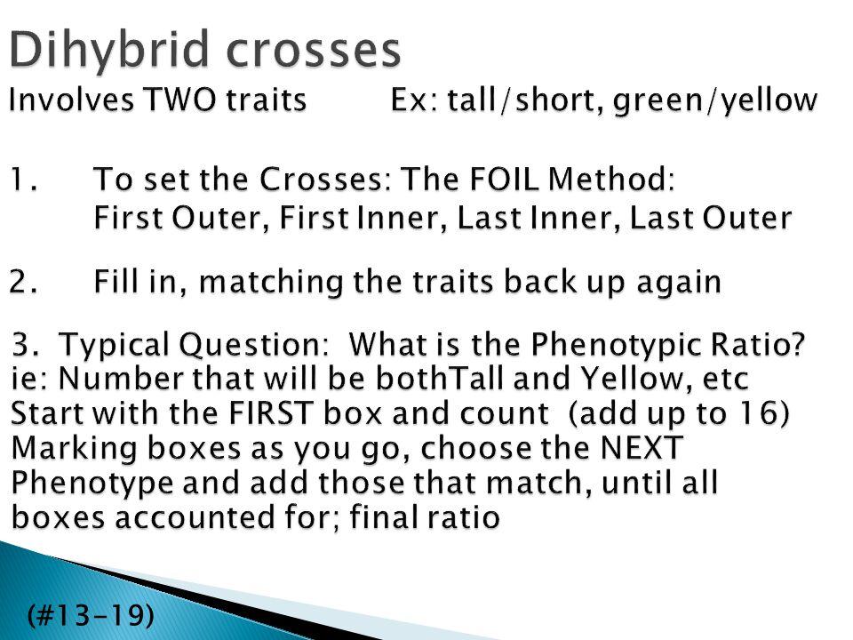 Dihybrid crosses (#13-19)