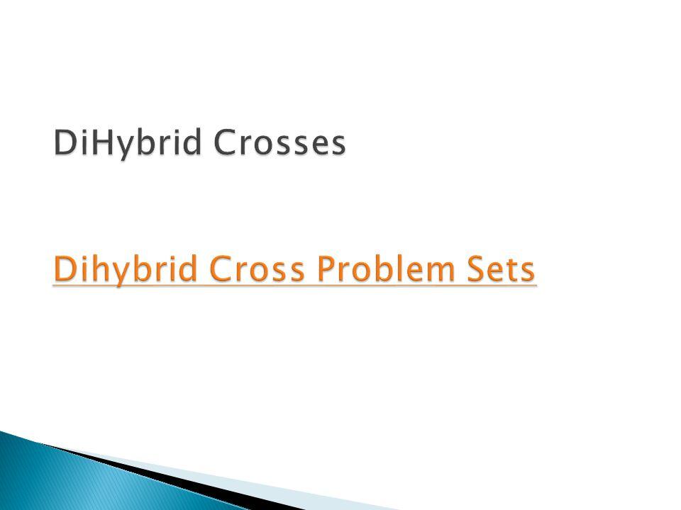 DiHybrid Crosses Dihybrid Cross Problem Sets Dihybrid Cross Problem Sets Dihybrid Cross Problem Sets