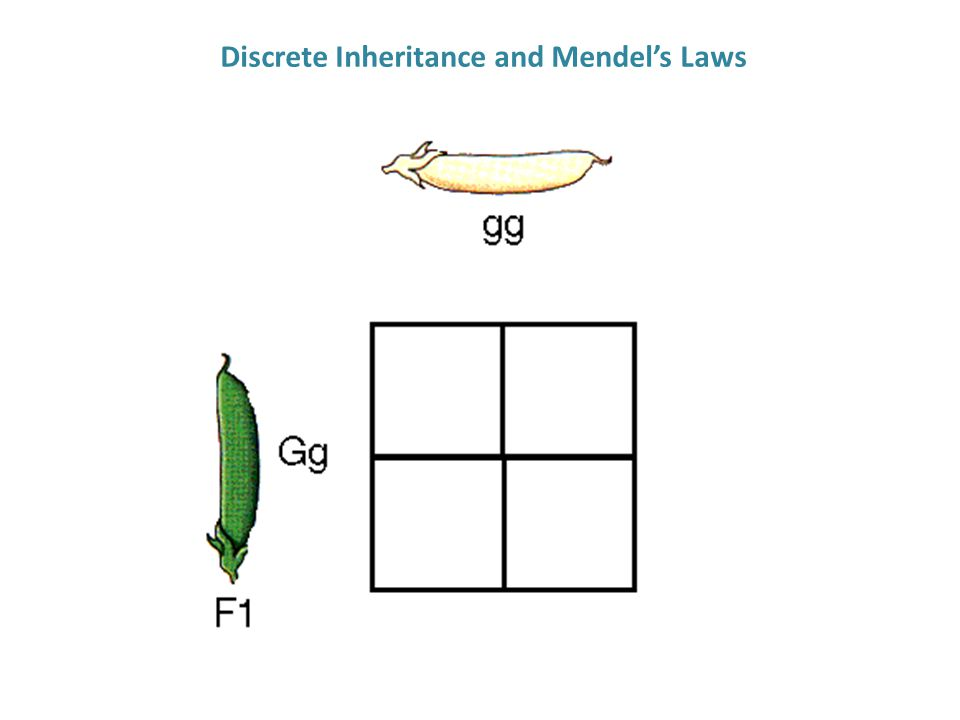 Discrete Inheritance and Mendel's Laws