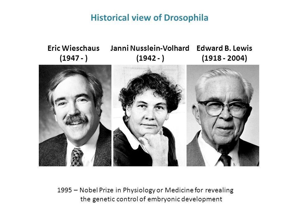 Eric Wieschaus (1947 - ) Janni Nusslein-Volhard (1942 - ) Edward B.