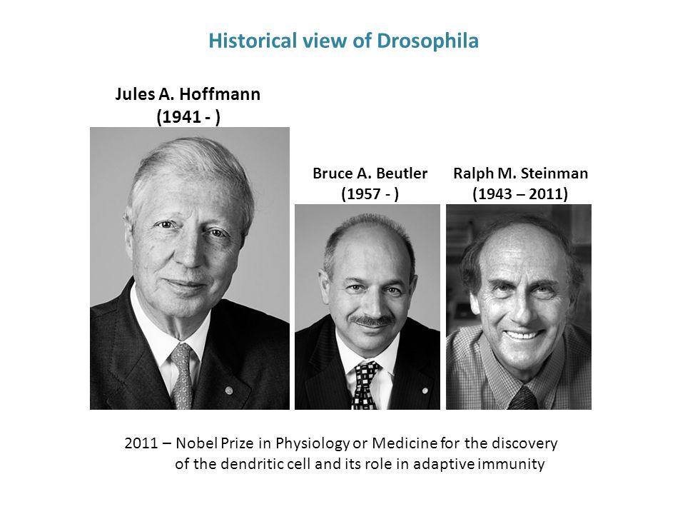 Jules A.Hoffmann (1941 - ) Bruce A. Beutler (1957 - ) Ralph M.